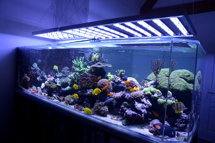 Plafoniere Per Marino : Plafoniera a led per acquario marino fai da te happycinzia