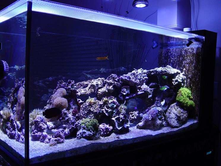 Illuminazione a led per acquari led acquario luci led for Lampada acquario