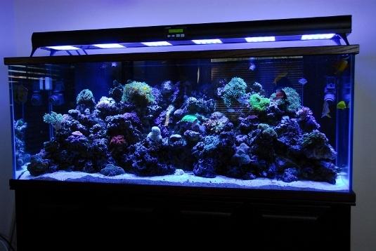 Plafoniera Led Per Acquario Acqua Dolce : Illuminazione acquario led come scegliere l