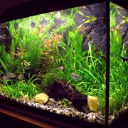 Un bell'esempio di acquario illuminato