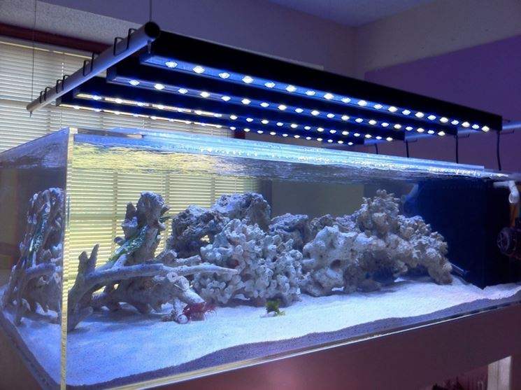 Plafoniere Led Per Acquario : Lampade a led per acquari acquario tipologie e differenze