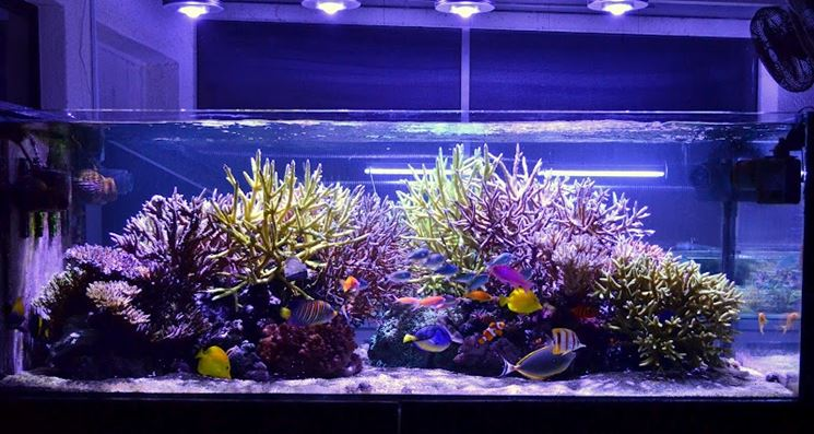 Lampade a led per acquari led acquario tipologie e differenze
