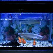 Esempio illuminazione acquario con led blu