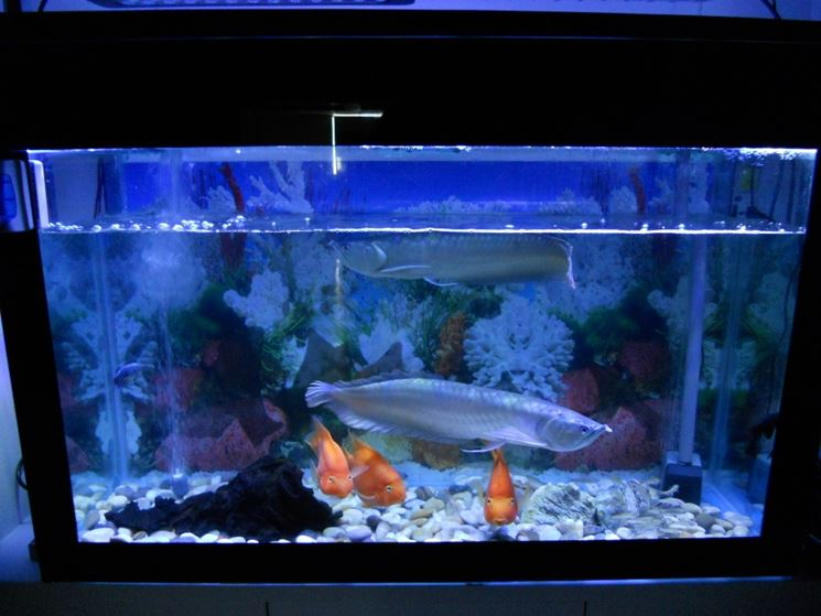 Led blu acquario led acquario tipologie e for Luci led per acquario