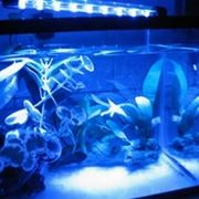 Luce acquario