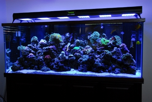 Luce acquario led acquario for Led per acquario