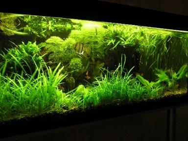 Neon acquario led acquario for Led per acquario