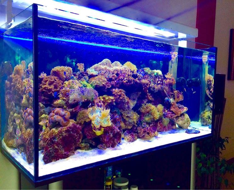 Plafoniera Led Per Acquario Acqua Dolce : Plafoniera acquario led per