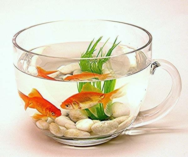 Alimentazione pesci rossi mangimi cibo per pesci rossi for Ossigenatore acquario pesci rossi