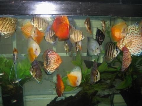 Acquario costi pesci acquario for Acquario per pesci