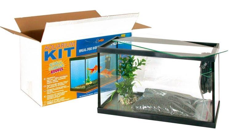 kit acquario pesci rossi