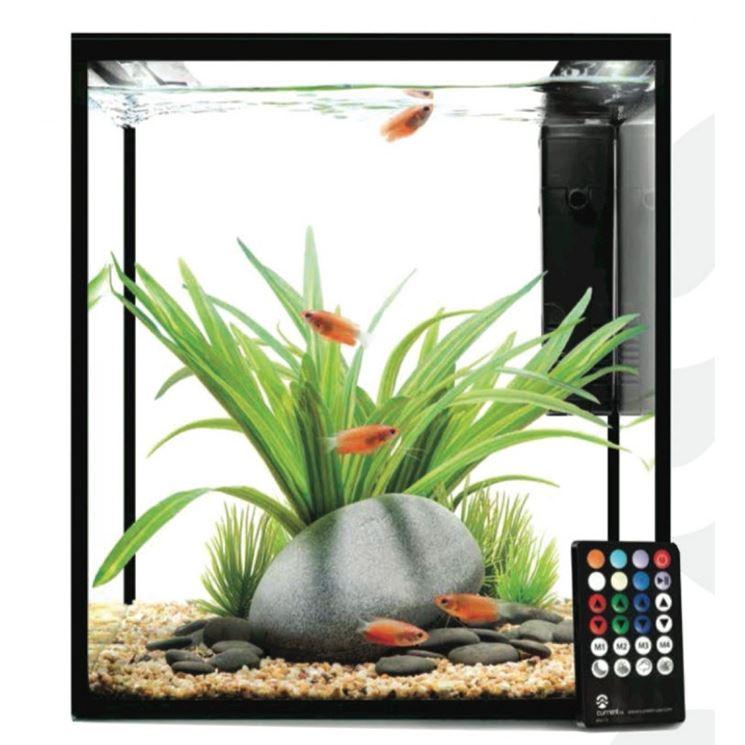 Acquario pesci rossi pesce acquario per pesci rossi for Pesci acqua fredda piccoli
