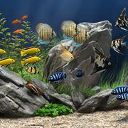 dove comprare pesci online