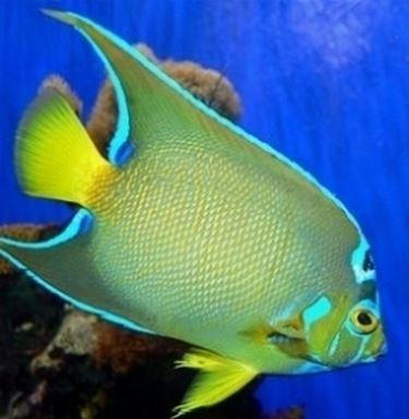 comprare pesci pesci acquario