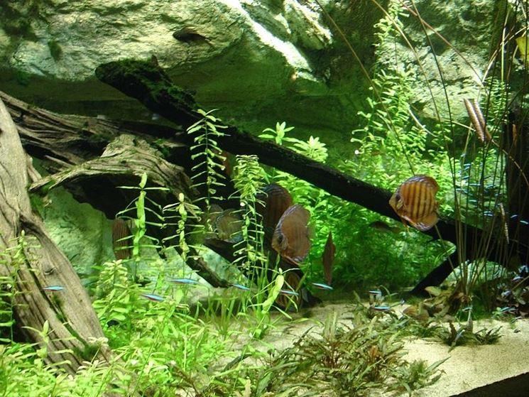 Un acquario tropicale