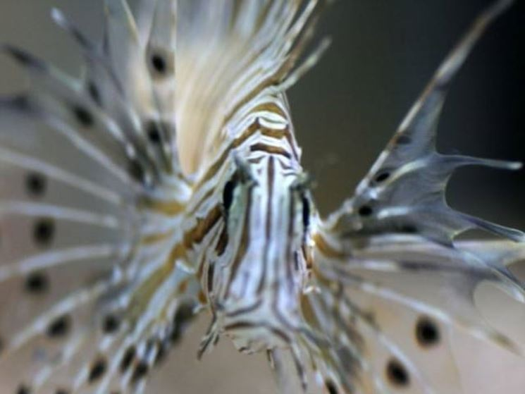 Un pesce con caratteristiche particolari