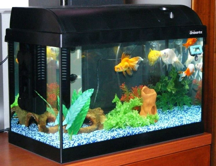 Acquario con pesci tropicali