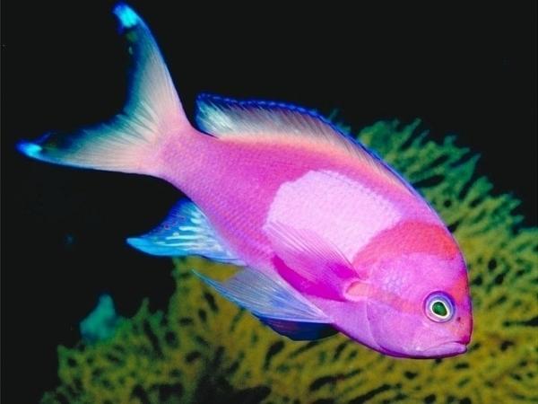 pesci tropicali pesce alla scoperta dei pesci tropicali On acquisto pesci tropicali online
