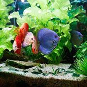 pesci acquario acqua dolce