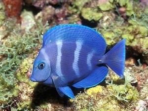 pesci on line pesci acquario