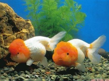 Pesci per acquari