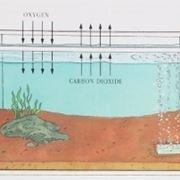 Aeratore acquario