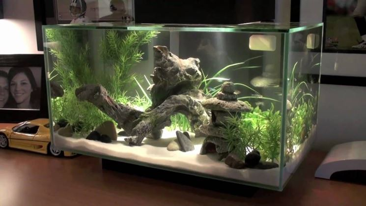 Fondo Per Acquario Of Fertilizzante Piante Acquario Piante Acquario Cura