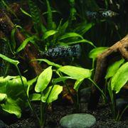 Esempio di acquario con piante