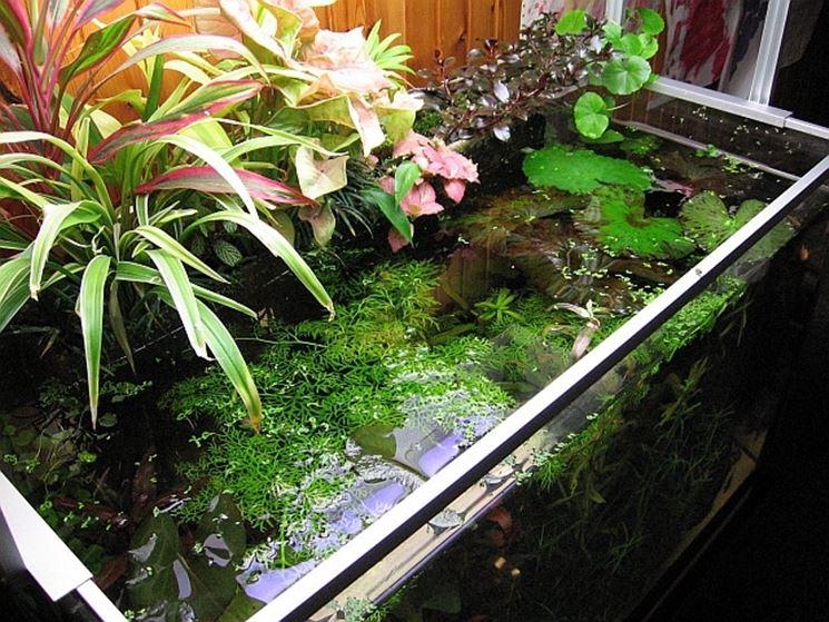 Piante galleggianti in acquario aperto