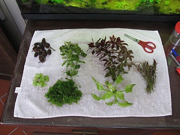 Potatura piante acquario