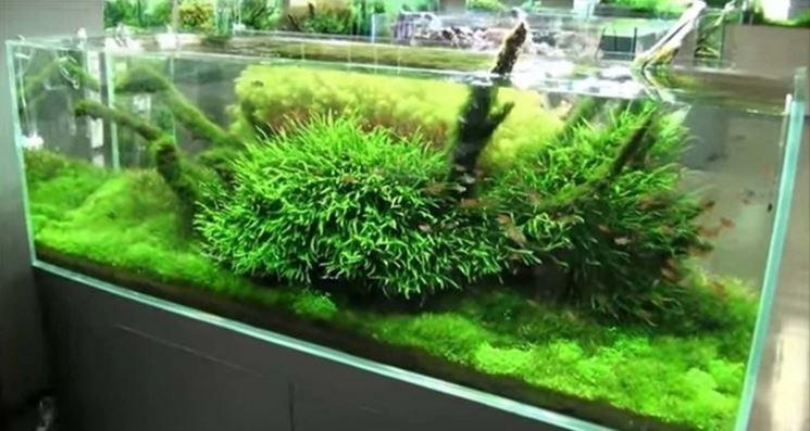 Esempio acquario con piante
