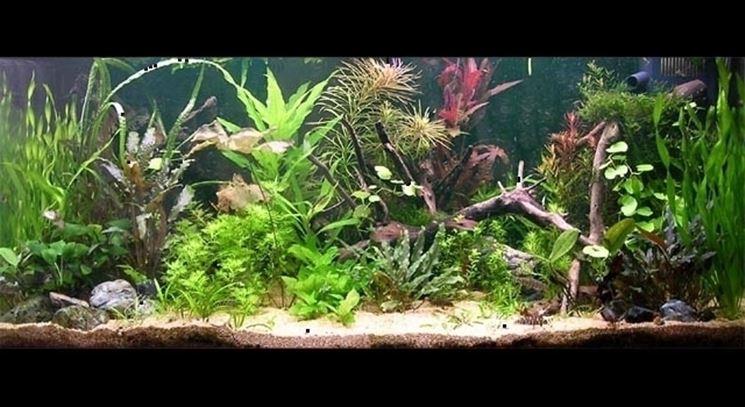 potatura piante acquario piante acquario come potare