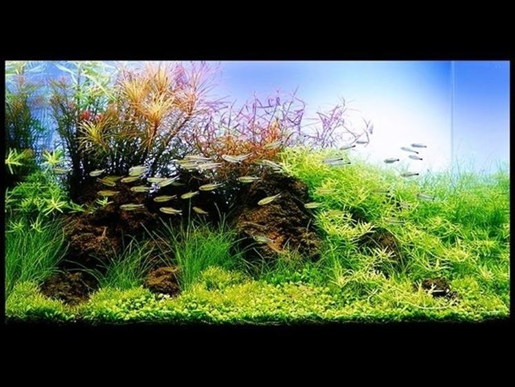 vendita piante acquario on line piante acquario piante