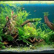 Un bellissimo esempio di piante per acquario