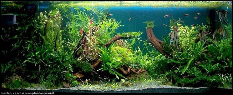 Vendita piante acquario piante acquario piante for Pesci acquario