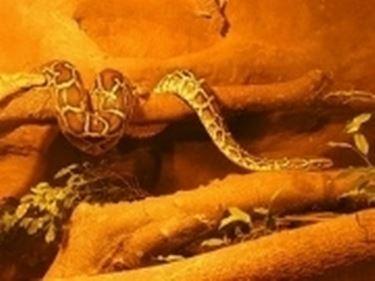 serpente teca