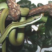 I serpenti e il sogno