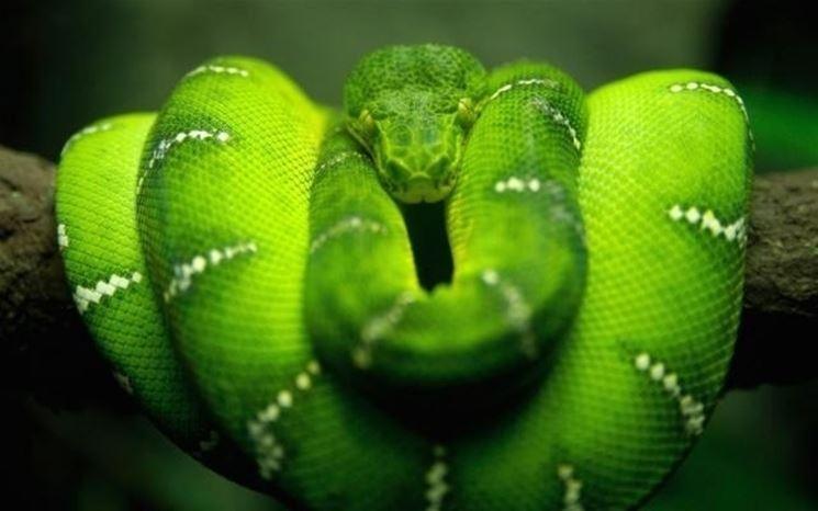 Significato sogno serpenti