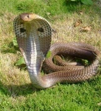 Veleno serpenti serpenti for Veleno per serpenti