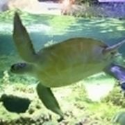 tartaruga d acqua