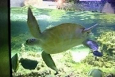 Acquario tartarughe d 39 acqua tartarughe for Acquario tartarughe prezzo