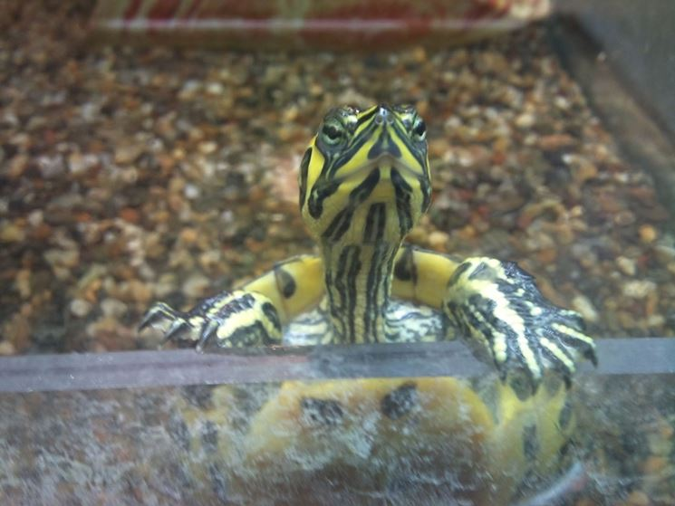 Acquario tartaruga
