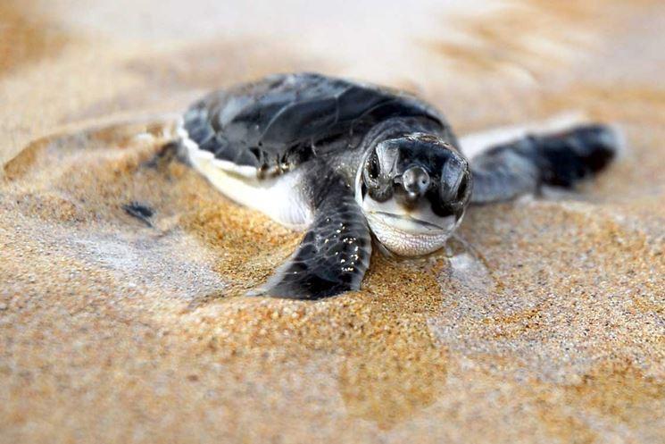 Comprare tartarughe tartarughe acquisto tartarughe for Tartarughe di acqua dolce