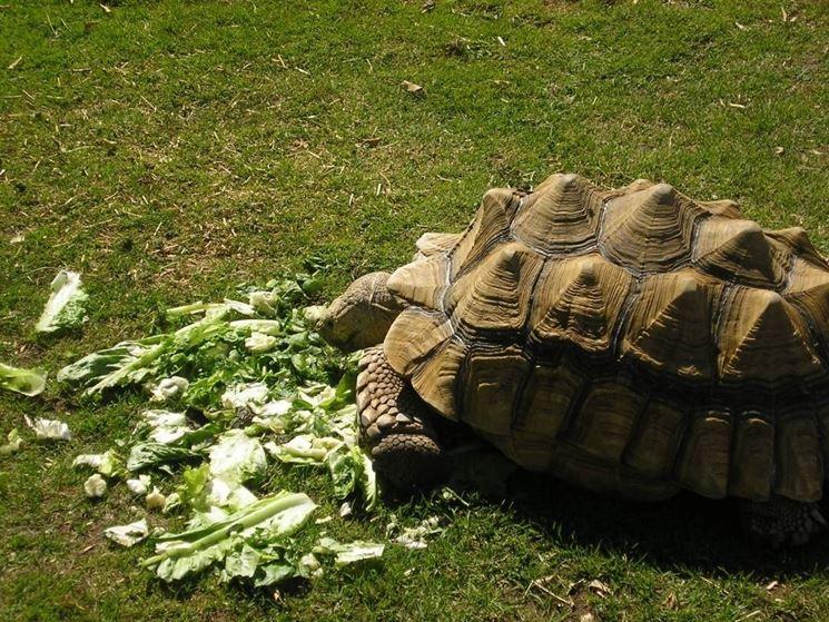 alimentazione tartaruga