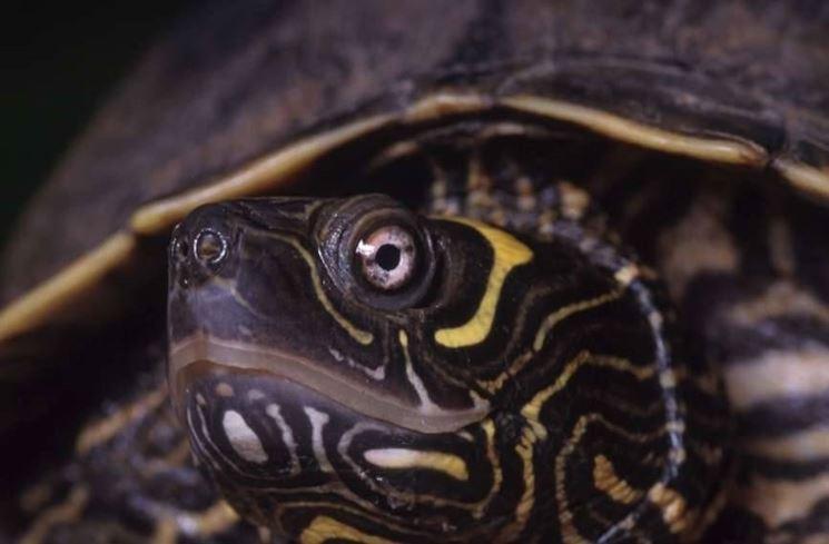 Primo piano di tartaruga