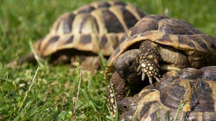 Tartarughe nell'erba