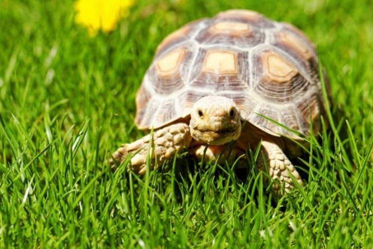 Tartaruga in salute