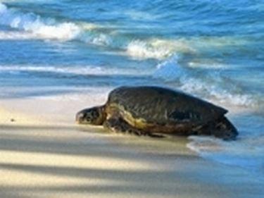 tartaruga marina sulla spiaggia