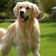 foto sezione cani grandi