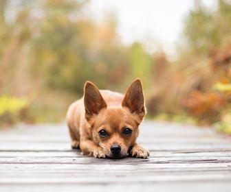 Cani Taglia Mini